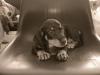 onex-sample-puppy